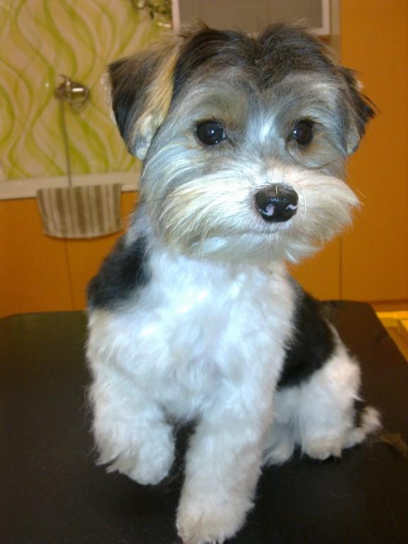 Dokonalá úprava psů - koupání, stříhání a vyčesávání
