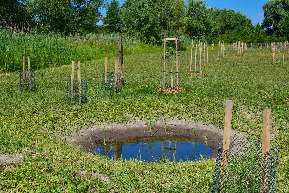 Projekty pro revitalizaci malých vodních ploch - tůně, mokřady, rybníky a malé vodní toky