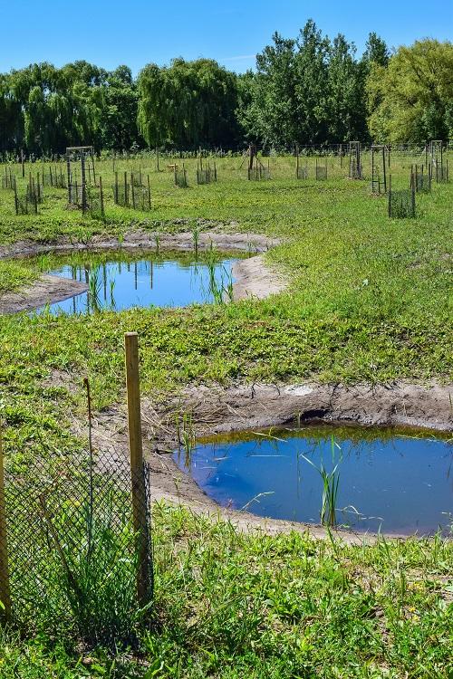 Revitalizace tůní, mokřadů a drobných vodních toků
