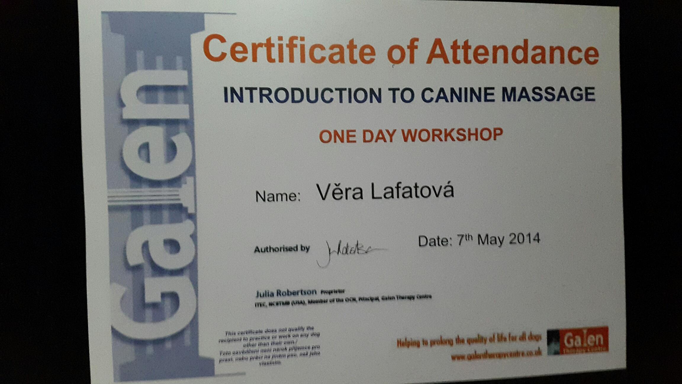 Rehabilitace psů Plzeň