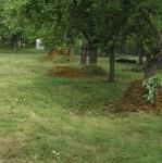 Úpravy parků a zahrad Praha