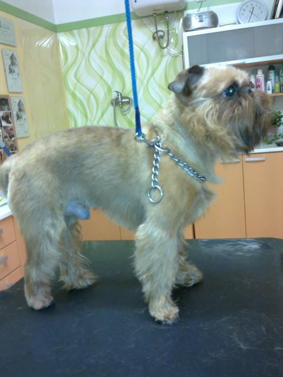 Stříhání a výstavní úprava psů - psí salon pro vaše čtyřnohé miláčky