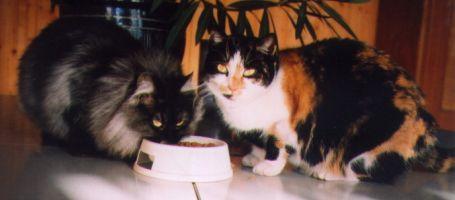 Ubytování pro psy a kočky Kolín