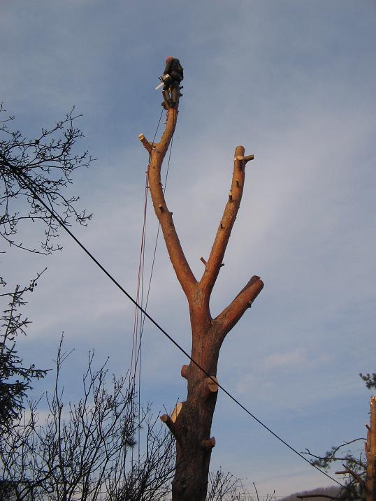 Rizikové kácení stromů horolezeckou technikou