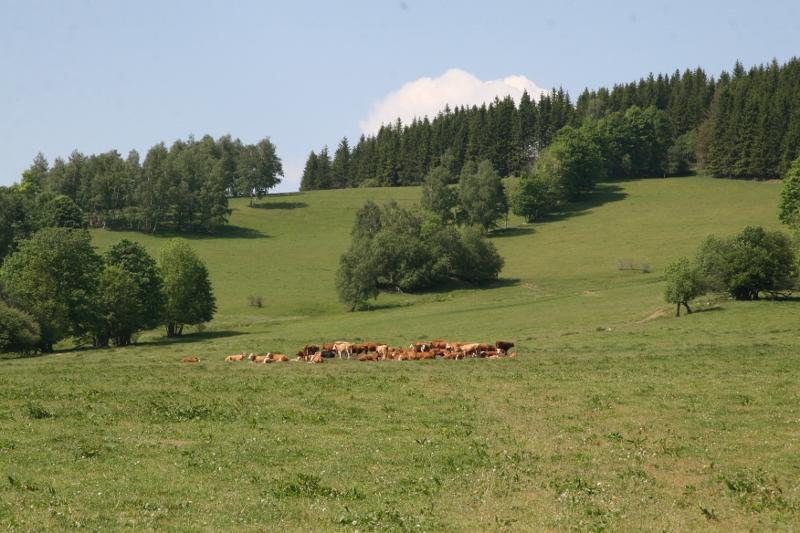Prodej, eshop - vyzrálé Bio hovězí maso, kuřata a kuřecí maso z farmy