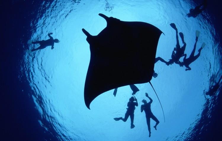 Potápěčské zájezdy a škola potápění v Egyptě, na Bali i dalších místech