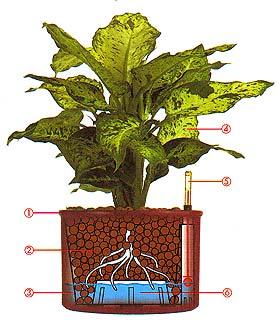 Hydroponie Praha – snadná a kompletní péče o dekorativní rostliny