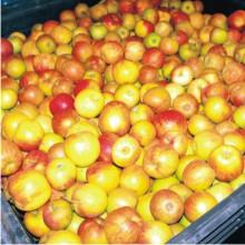 Velkoobchodní dodavatel ovoce a zeleniny ZEO Trade, s.r.o.