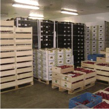 Výkup, přeprava a prodej ovoce a zeleniny