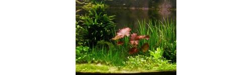 Potřeby pro akvaristiku, akvária, terária, akvarijní rostliny, krmivo pro ryby