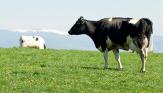 Výživa, minerální, doplňková směs, krmivo pro zvířata Olomouc