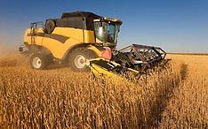Bílovská zemědělská a.s., prodej osiva, prodej ovocných stromků, drcení a vakuování kukuřice