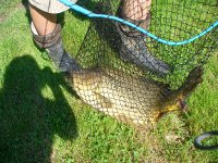 Prodej, chytání ryb, rybolov, rybářství Frýdek-Místek