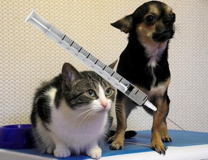Zajistěte si včas - Hromadné očkování psů proti vzteklině 2021 Česká Lípa a blízké obce