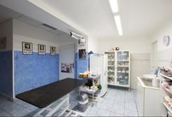 Veterinární ordinace, léčba, prevence u zvířat, chovatelské potřeby, okres Semily