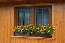Dřevěná okna z plastu