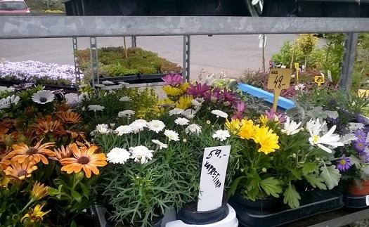 Květiny do truhlíků Opava