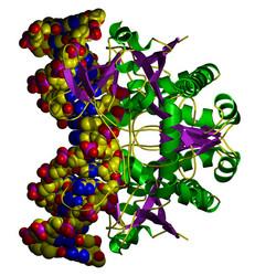 Testy pro in vitro diagnostiku nebo výzkumné účely