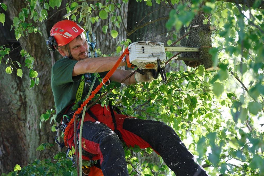 Rizikové kácení stromů za pomoci stromolezeckých metod, Liberec