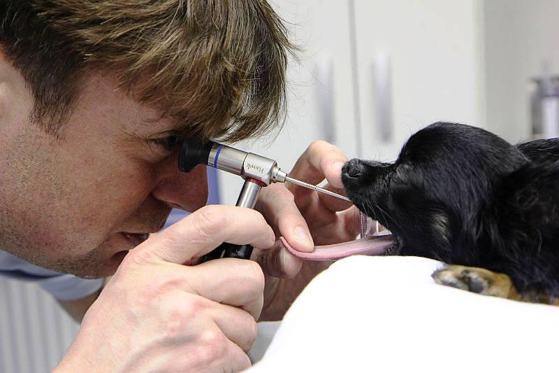 Bezbolestné veterinární vyšetření dýchacích cest včetně rentgenu psa i kočky - tracheoskopie Opava