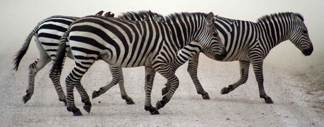 Zebra Velim – výroba samolepících etiket rychle a kvalitně