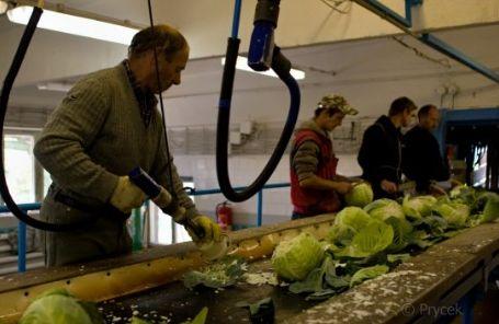 Prodej krouhané a kysané zelí Frýdek-Místek
