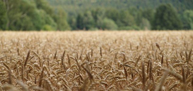 Rostlinná a živočišná výroba, zemědělské družstvo Velké Svatoňovice