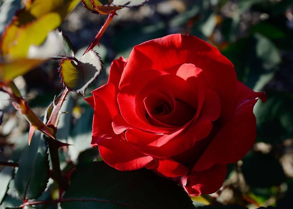 Letní mezinárodní květinová výstava a zahradnický veletrh Flora Olomouc