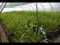 Prodej mykorhiza hnojiva symbi�za ekologick� p�stov�n� Lan�kroun