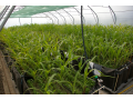 Prodej p��rodn� hnojivo ekologick� p�stov�n� rostlin Lan�kroun