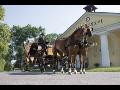 Hřebčín, jízda na koni, ustájení, restaurace, Albertovec, Opavsko