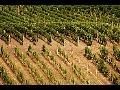 Břeclav, turistická a rekreační oblast, kultura a dobré víno