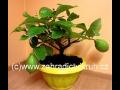 Zahradnictví, subtropické a tropické rostliny, citrusy, prodej, e-shop