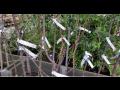 Samolepící etikety z materiálu Tyvek - použití v zahradních centrech a v zemědělství