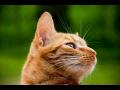 Veterina, soukromá veterinární ordinace - profesionální služby zkušeného veterináře