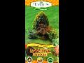 Přírodní zahradní rašelina pro zlepšení, provzdušnění, prokypření zahradních půd a úpravě pH