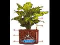 Hydroponie Ostrava – snadná péče o rostliny v interiéru