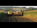 Kukuřice - porovnání jednotlivých hybridů