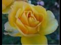 Zahradnictví hnojiva rašelinové tablety aloe mučenka růže Semily