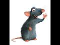 Dezinsekce deratizace huben� hlodavc� potkan� krys my�� hmyzu