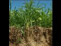 TerraLife směsi – zlepší kvalitu půdy a omezí choroby rostlin
