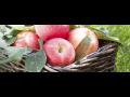 Zahradnictví - okrasná a ovocná školka