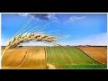 Financování zemědělské půdy až do 100% kupní ceny - výhodné úrokové sazby
