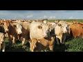 Bio chov masného skotu, hovězí maso, ekologická bio jatka