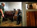 Specializovaná veterinární péče o koně v obci Mrač
