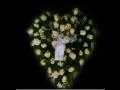 Tradiční pohřeb do hrobu Česká Lípa
