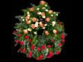 Smuteční a vzpomínkové kytice a věnce - Nový Bor