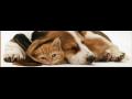 Veterinární ordinace, zvěrolékařka se specializací na léčbu hospodářských zvířat, Sokolov
