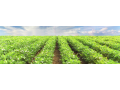 Zemědělské stroje značky Zetor, Kubota, Merlo, Valtra, Kverneland a mnoho dalších