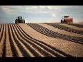 Pěstování řepky a pšenice Kralovice